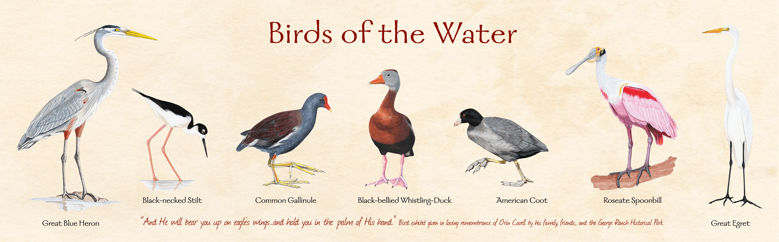 np_gr_birdsofwater