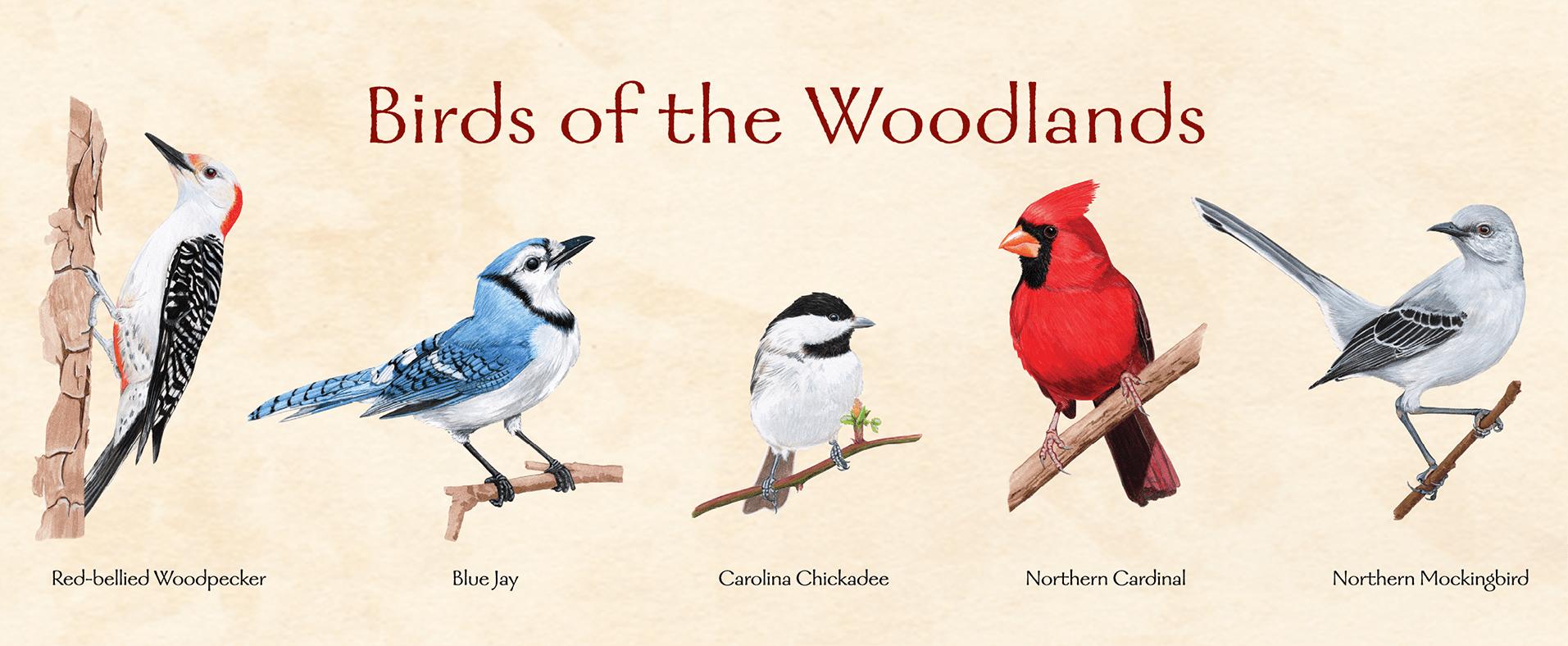 np_gr_birdsofwoodlands