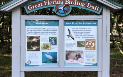 Capturing the Best of Florida's Birding and Wildlife in Just 24 Square Feet